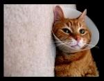 Satellite Dish Kitty