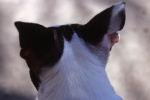 Highlight for Album: Dogs