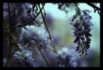 Highlight for Album: Nature