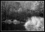 Lake (Infrared)