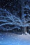 Highlight for Album: Princeton, KY Winter