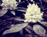 Highlight for Album: Flora & Fauna