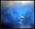 In-Flight at Sunset