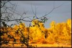Sunset - Arlington, TX