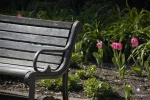 Highlight for Album: Fort Worth Botantical & Japanese Gardens Fort Worth, Texas