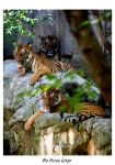 Fort Worth Zoo, Fort Worth, Texas