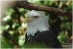 Caldwell Zoo - Tyler, TX